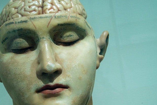a scientific model of a person with the brain exposed